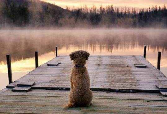 terrier overlooking lake