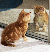 Kitten seeing reflection