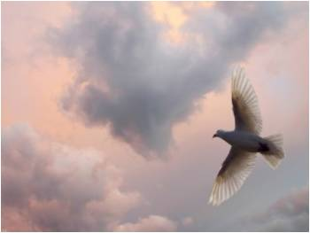 soaring bird of peace