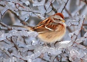 bird on icy branch
