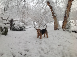 Teddy in snow
