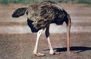 resisting ostrich head in sand