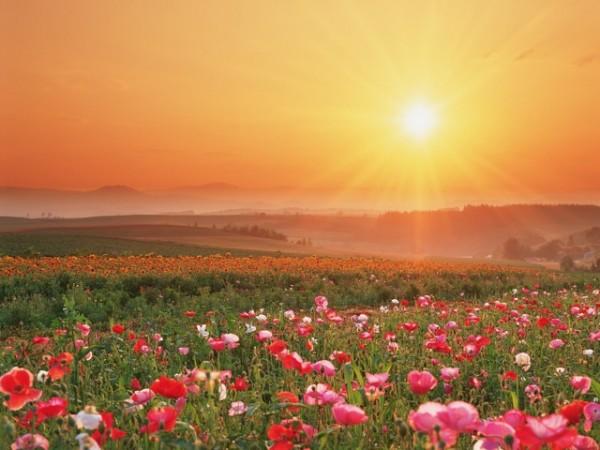 dawn of a new earth