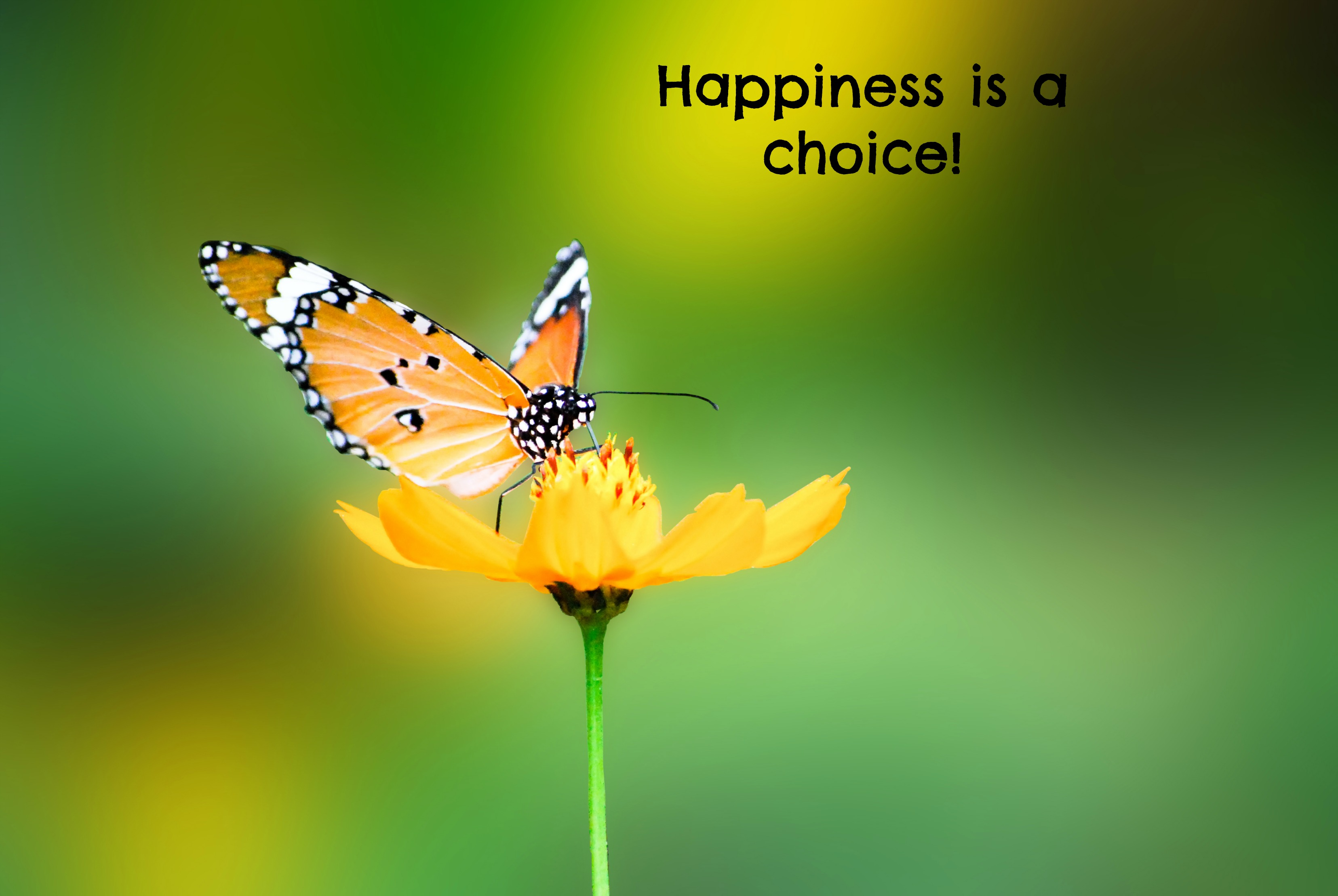 Image Result For Happiness Is A Choice