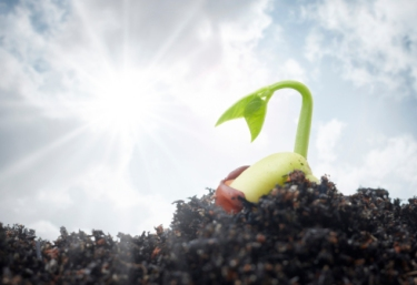 plant emerging