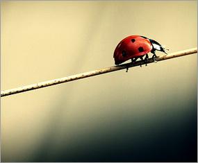 mindful ladybug