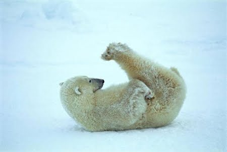 polar bear yoga