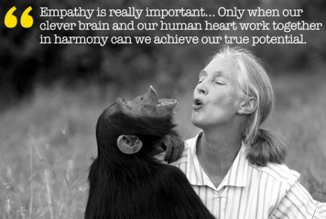 empathy with chimpanzee