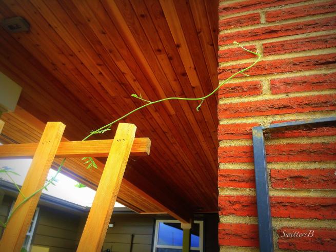 wisteria-vine-brick-reaching-gardening-photography-SwittersB