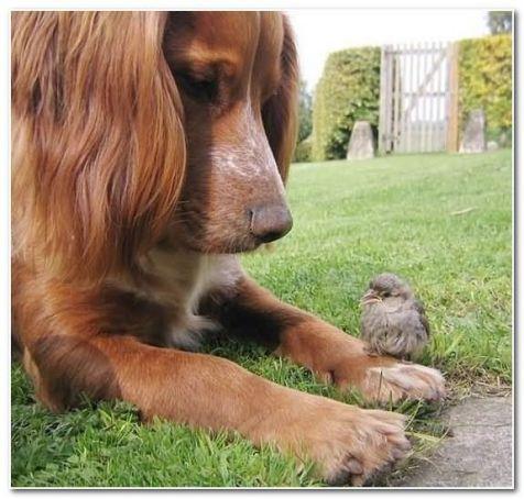 curious dog with bird