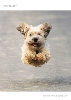 dog running in nature