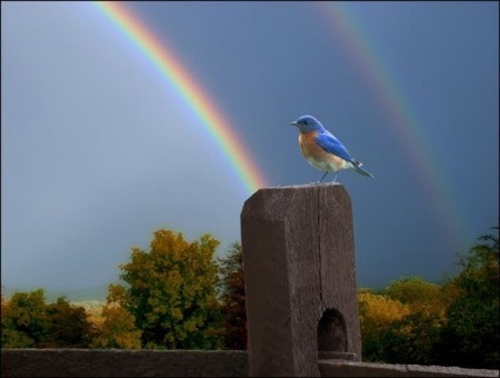 rainbows and bluebird