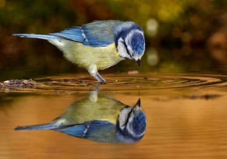 bird in reflection