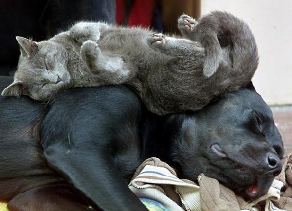 dog and cat being present