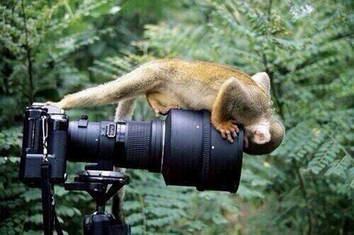 camera and monkey