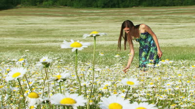 pick more daisies