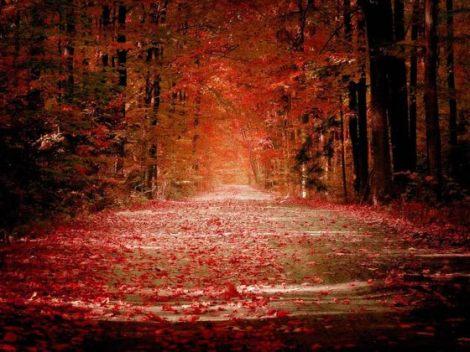 dharma - path of love