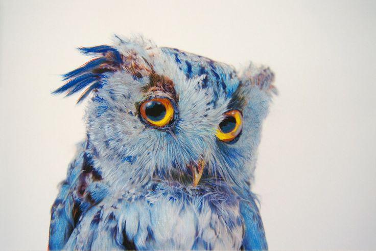 spiritual wise owl
