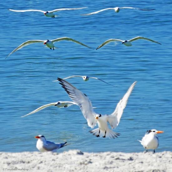 terns landing