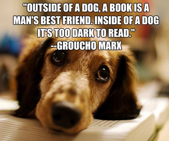 dog and book quote
