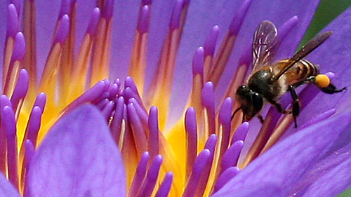 bee searching for nectar