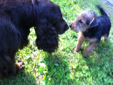 Harry and Dilys - love at first sniff