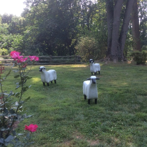 sheep in the garden