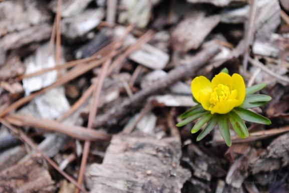 inner bloom