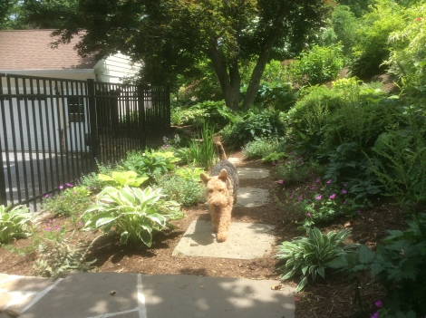 Teddy on the path