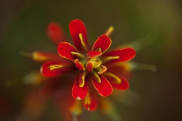 open heart flower