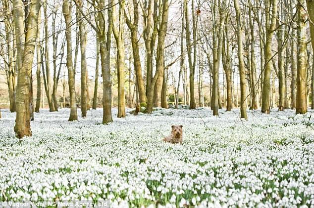 terrier in flowers