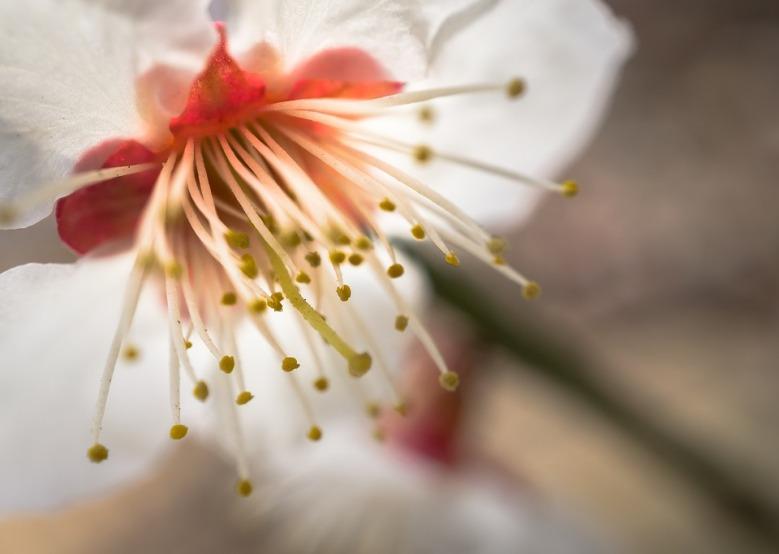 life blossom