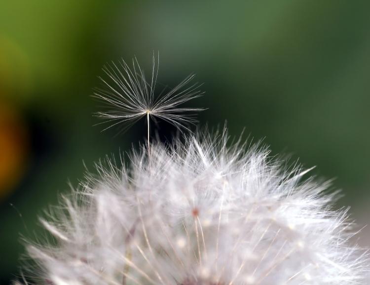 little seed breaking free