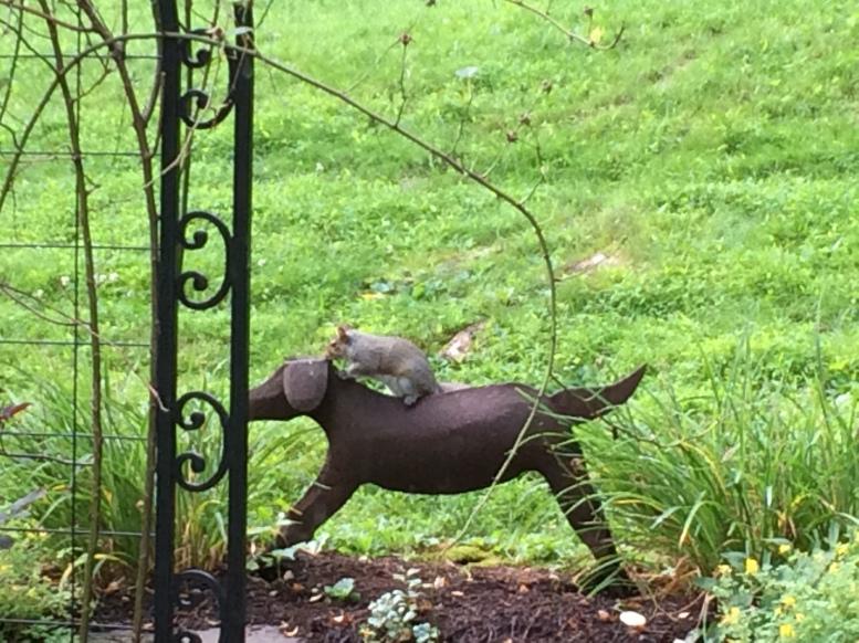 squirrel on dog
