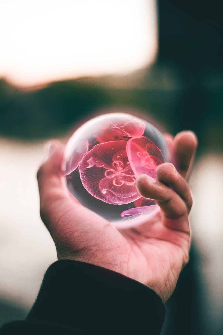 person holding clear and red floral ball